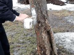 Когда белят деревья осенью?