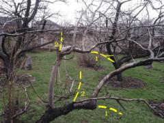 Когда и как обрезать плодовые деревья?