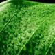 Транспирация: что это такое в жизни растений