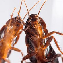 Выбираем самые эффективные ловушки для тараканов