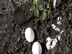 Как приготовить удобрение из яичной скорлупы?
