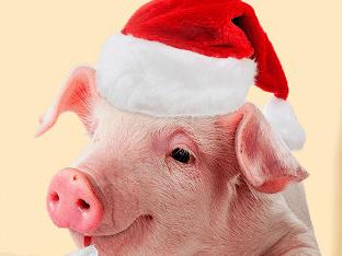 В чем и каком цвете встречать Новый год свиньи