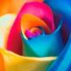 Что о тебе скажет твой любимый цвет?