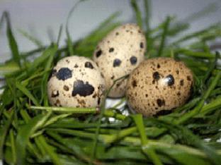 Рецепты блюд с перепелиными яйцами