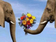 Что означает сон, в котором приснилось слон?