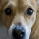 Болезни глаз у собак: симптомы, лечение, профилактика