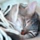 Лечение пневмонии у котят. Пневмония у кошек