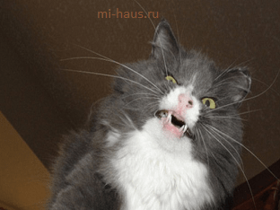 Почему чихает кот?