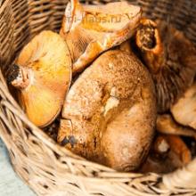 Какие грибы можно собирать осенью?
